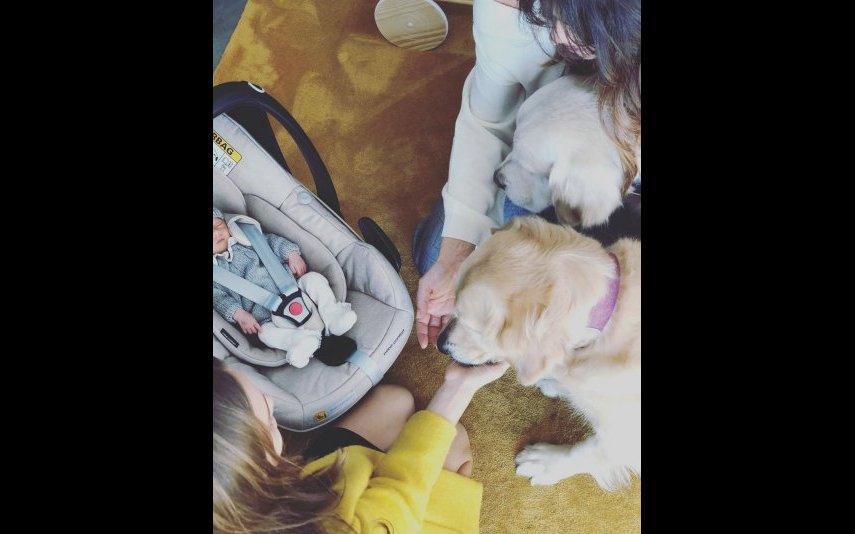Caetana a conhecer os cães Yoshi e Caya