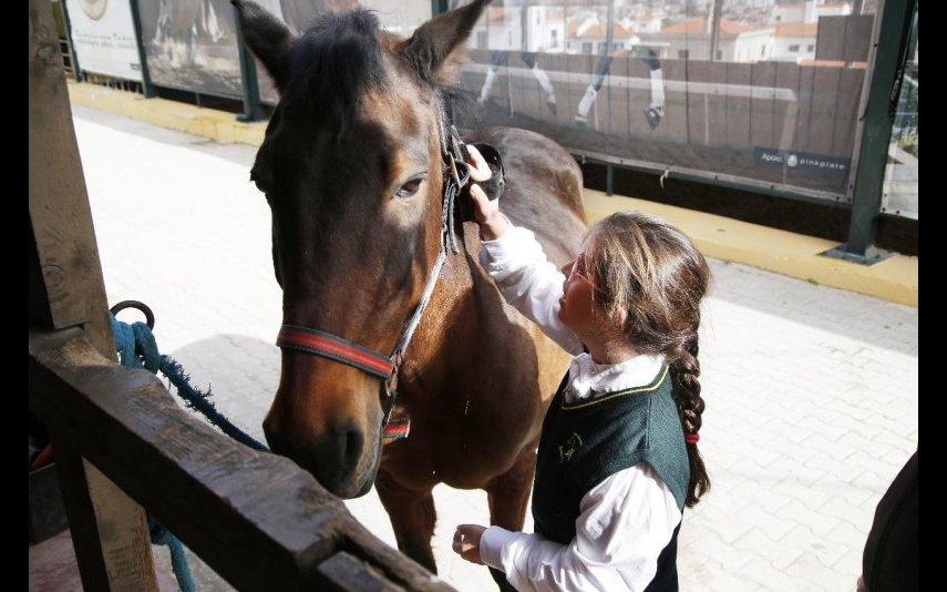 Madalena a tratar do cavalo que costuma montar