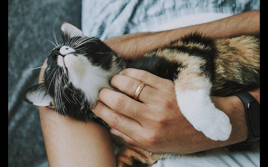 Em 2020, houve um aumento de adoções de animais de companhia em Portugal, mas também de abandonos